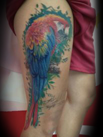 pappagallo tropicale fabio torti soft tattoo